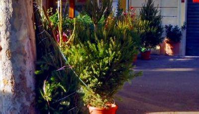 Живая рождественская елка теряет популярность в италии